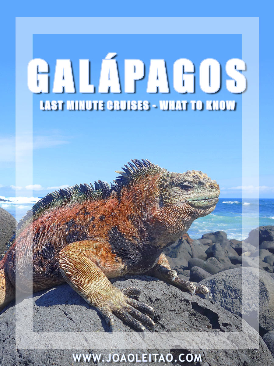 Galapagos Islands Last Minute Cruises - What to Know