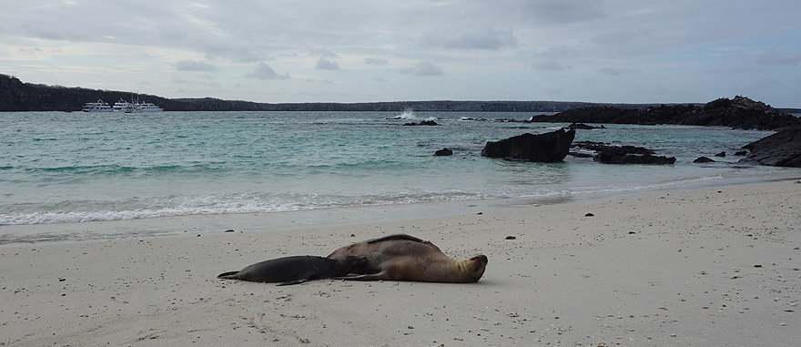 Sea lions on the beach in Genovesa Island - you can only visit Genovesa while on a cruise