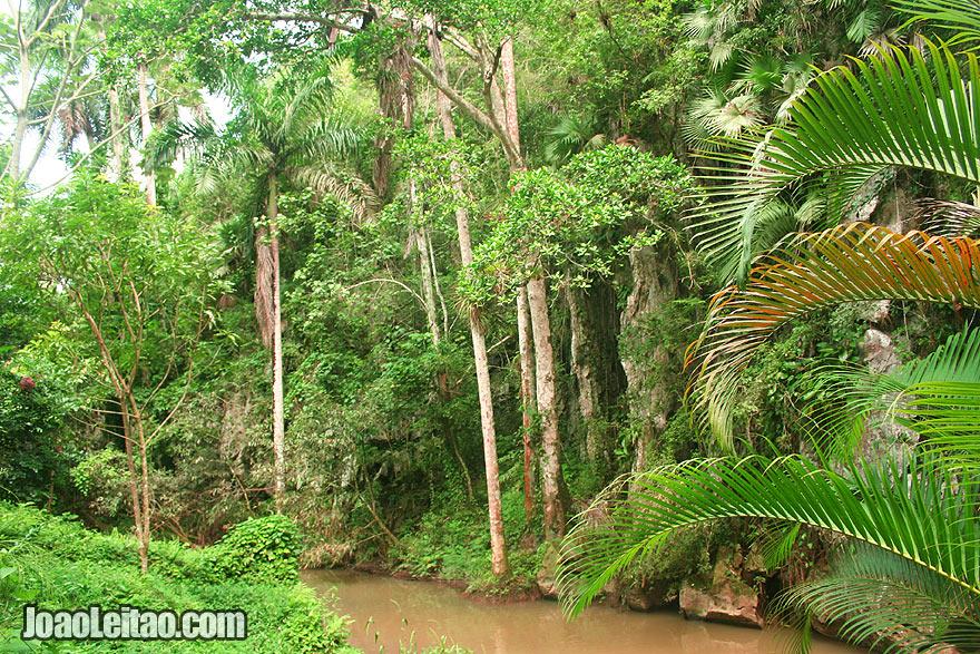 Jungle in Viñales region