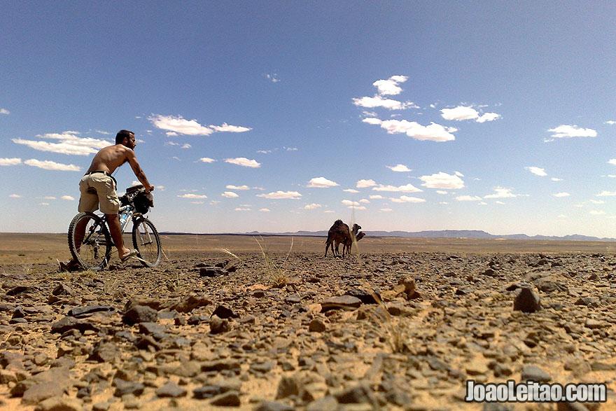 Biking Sahara Desert along with camels