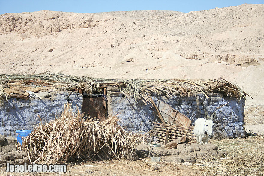 Cute lonely donkey by a stone house in Luxor