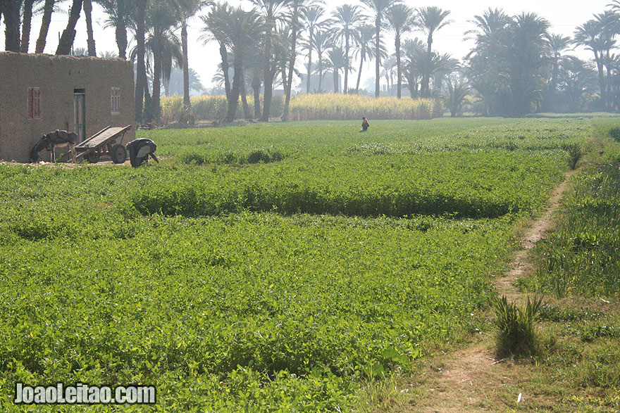 People working on the plantations of the West Bank of Luxor