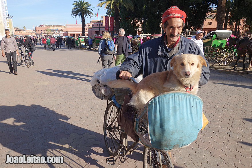 Man with dog on a bicycle in Marrakesh
