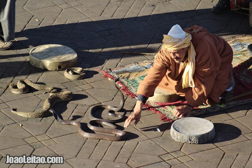 Snake Charmer of Marrakesh