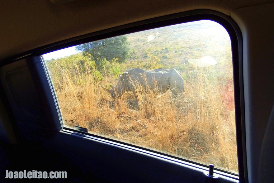 Self-Drive Safaris in South Africa