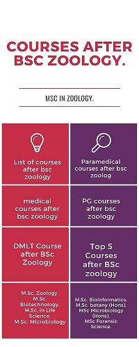 List of courses after bsc zoology in inforgraphic