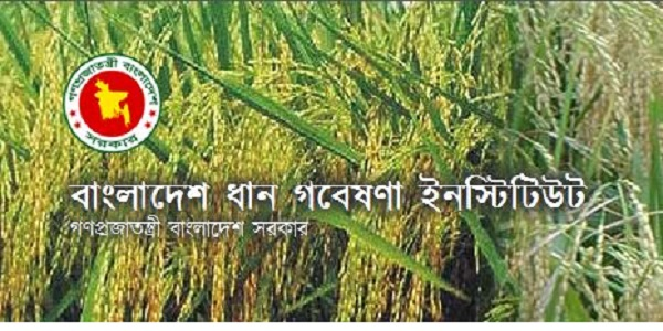 Bangladesh Rice Research Institute BRRI Job Circular 2019