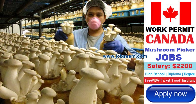 Mushroom Picker Jobs in CANADA for Foreigners 2017 Canada Job Postings