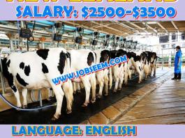 Cow Farm Assistant Wanted in NEW ZEALAND 2018