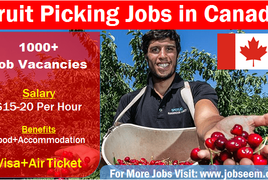 Fruit Picking Jobs in Canada Job Bank Fruit Picker 2020
