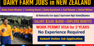 Farming Jobs in New Zealand Dairy Farm Jobs for Foreigners
