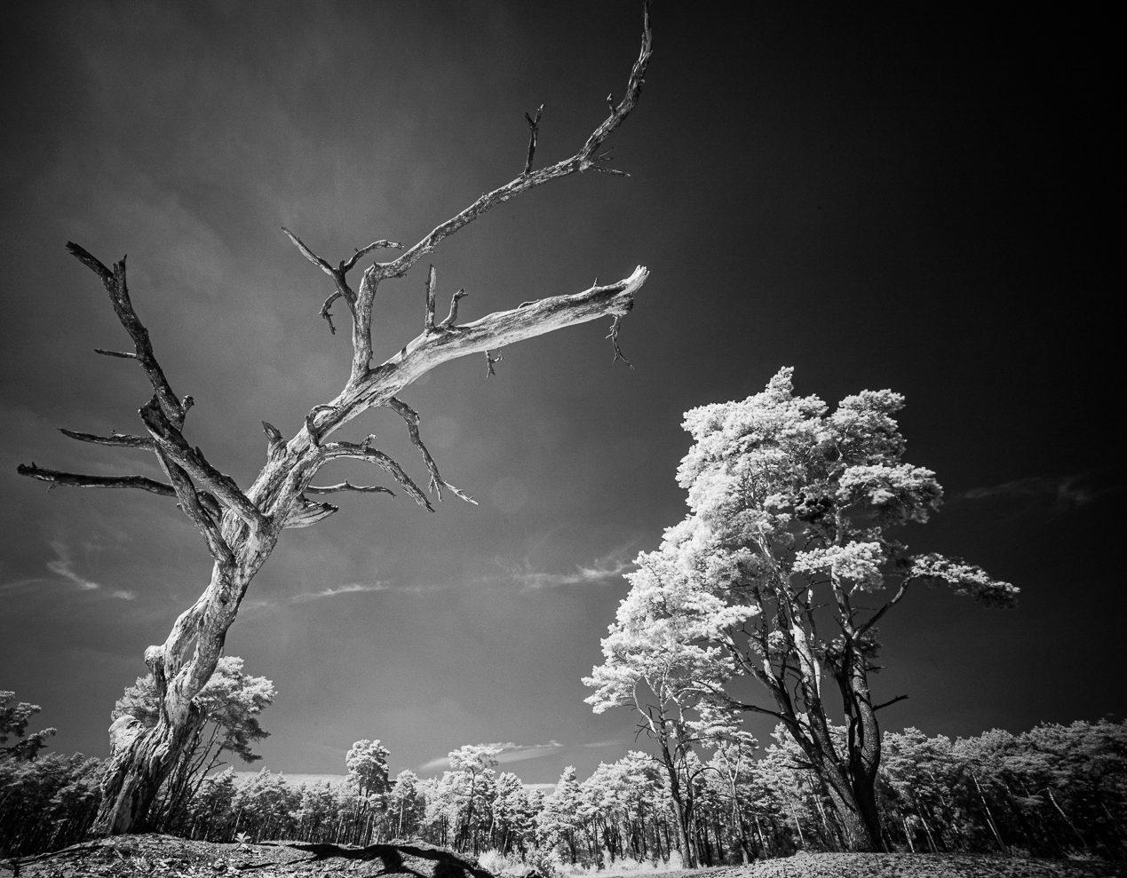 Bäume – IR