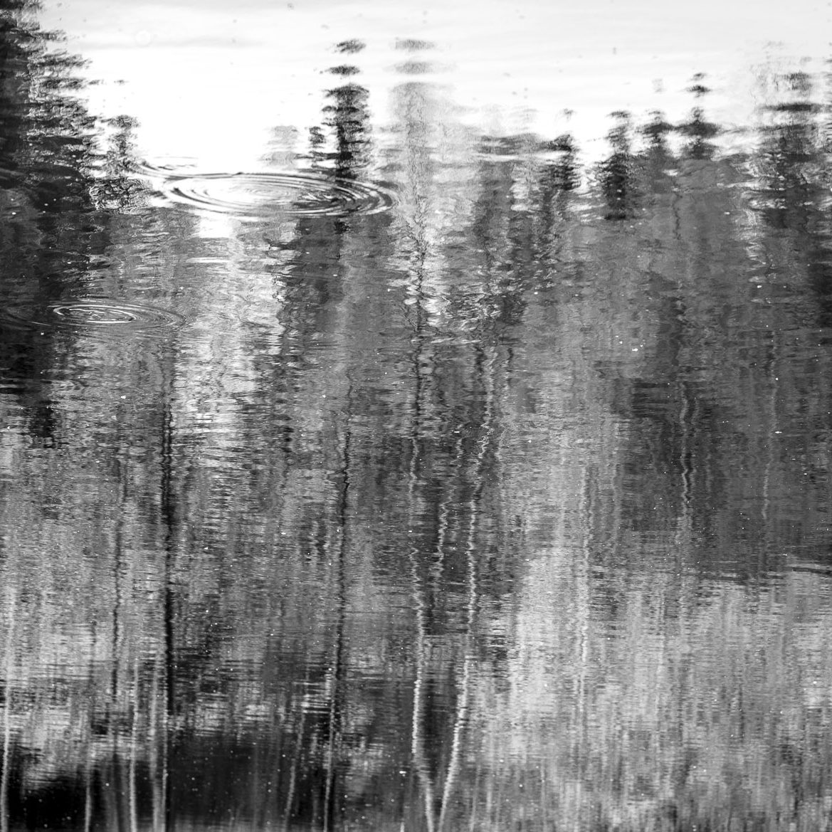 Frühling am Spießweiher #3