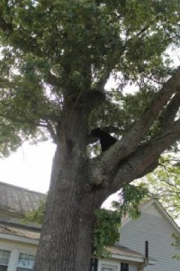 Bear Sighting Pic 1