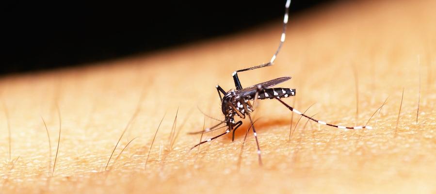mosquito diseases