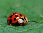 Link to blogpost: Keeping Ladybugs Out Of Your Home