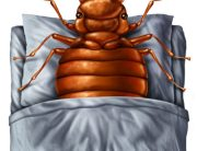 Bed Bug Prevention