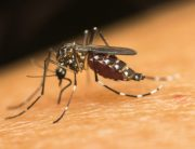 Link to blogpost: Preventing Mosquitoes In The South