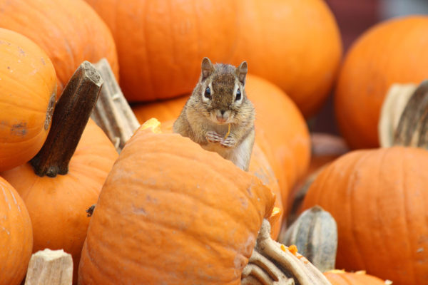Fall Pest Prevention