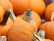 Link to blogpost: Tips To Prevent Pests This Fall
