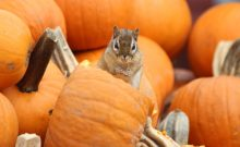 Fall Pest Prevention