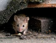 Link to blogpost: Wildlife Prevention Tips