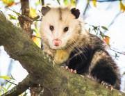 Link to blogpost: Summer Wildlife Control & Prevention