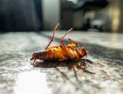 Link to blogpost: 10 Common Pest Control Myths