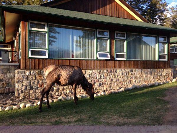 Cabins at The Fairmont Jasper Park Lodge