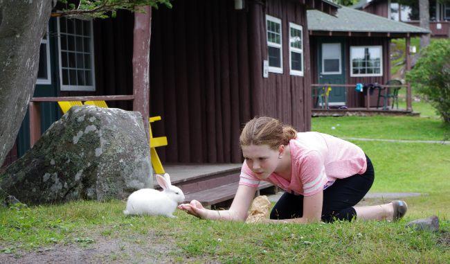 kid feeding bunny