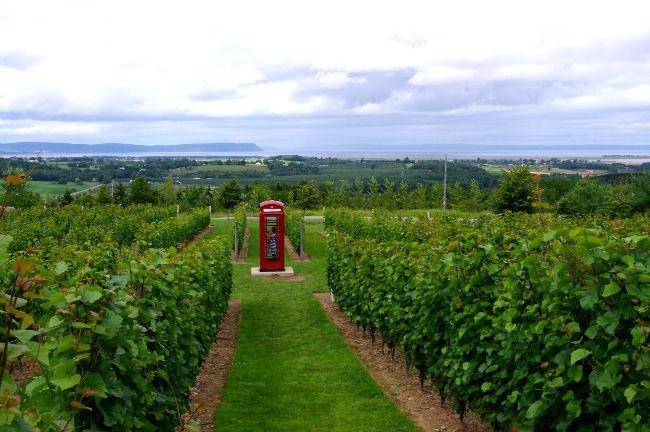 luckett vineyard phone booth