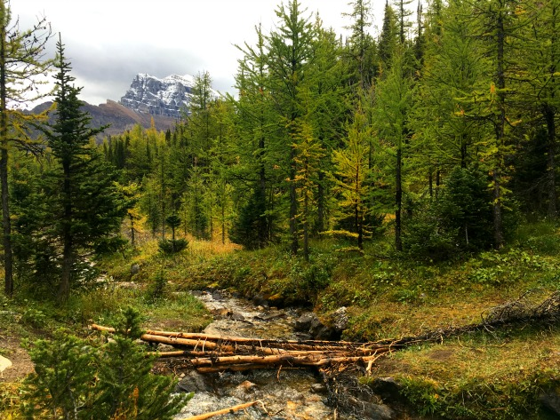 What you need to know before doing the Larch Valley hike