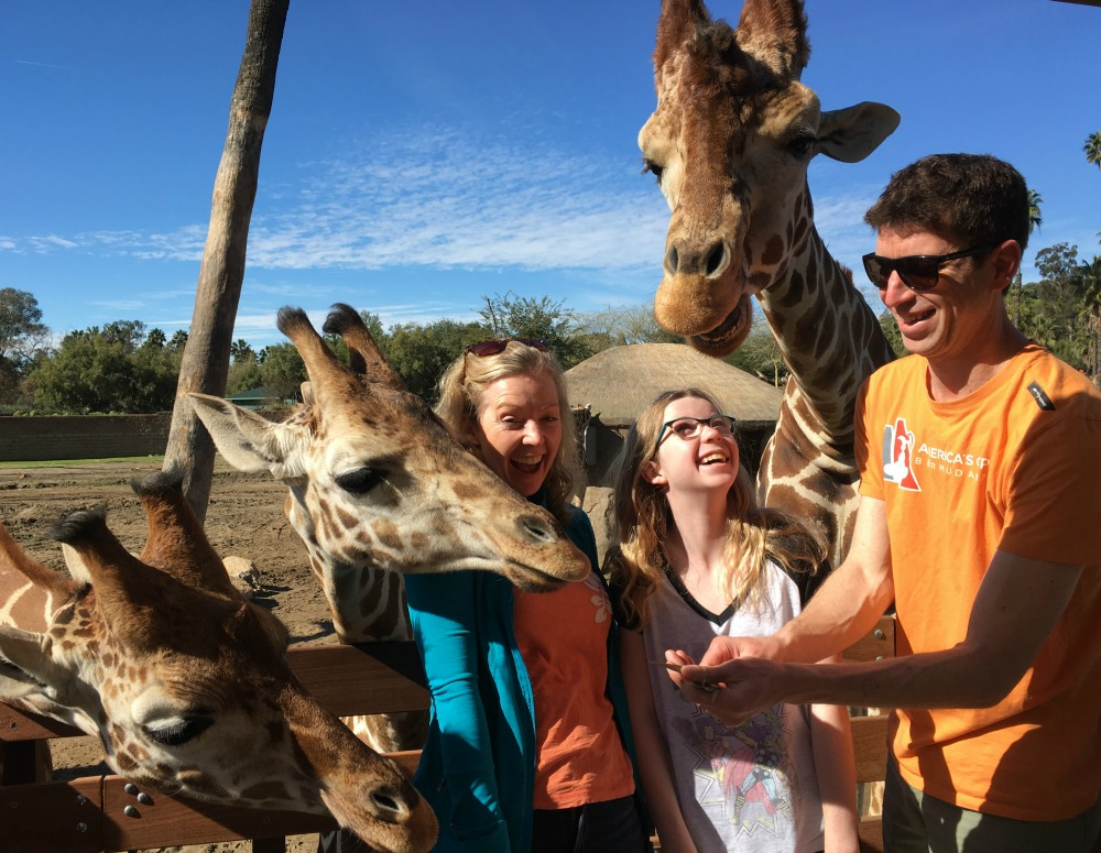 Feeding giraffes San Diego Safari Park Zoo