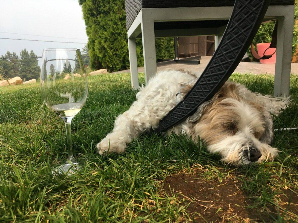dog at winery