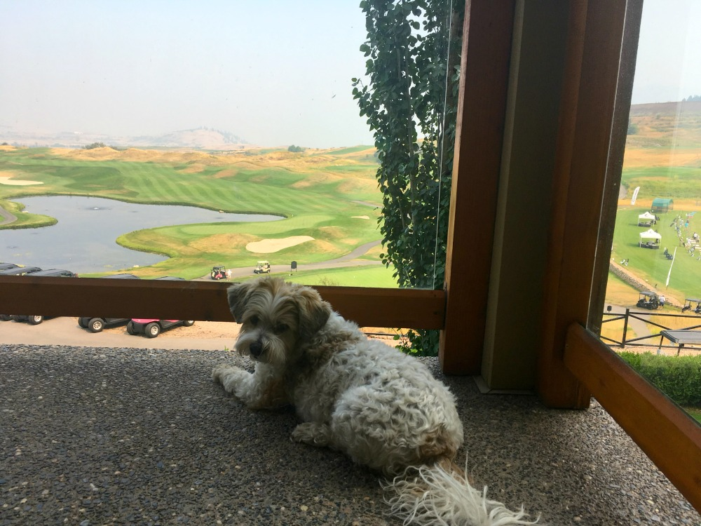 dog on patio at golf course