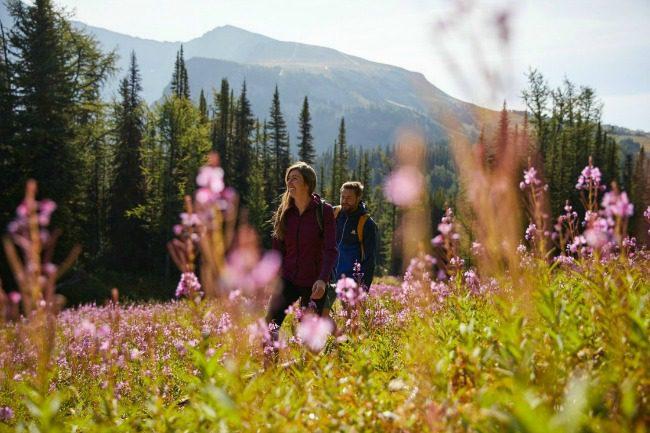 sunshine meadows hike