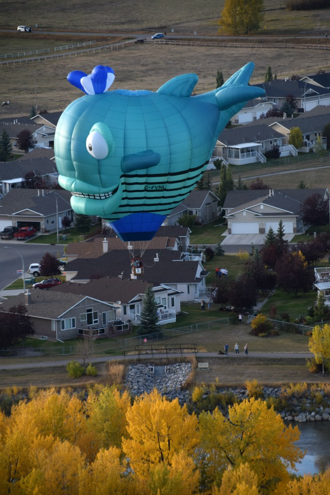 fish balloon heritage inn international balloon festival