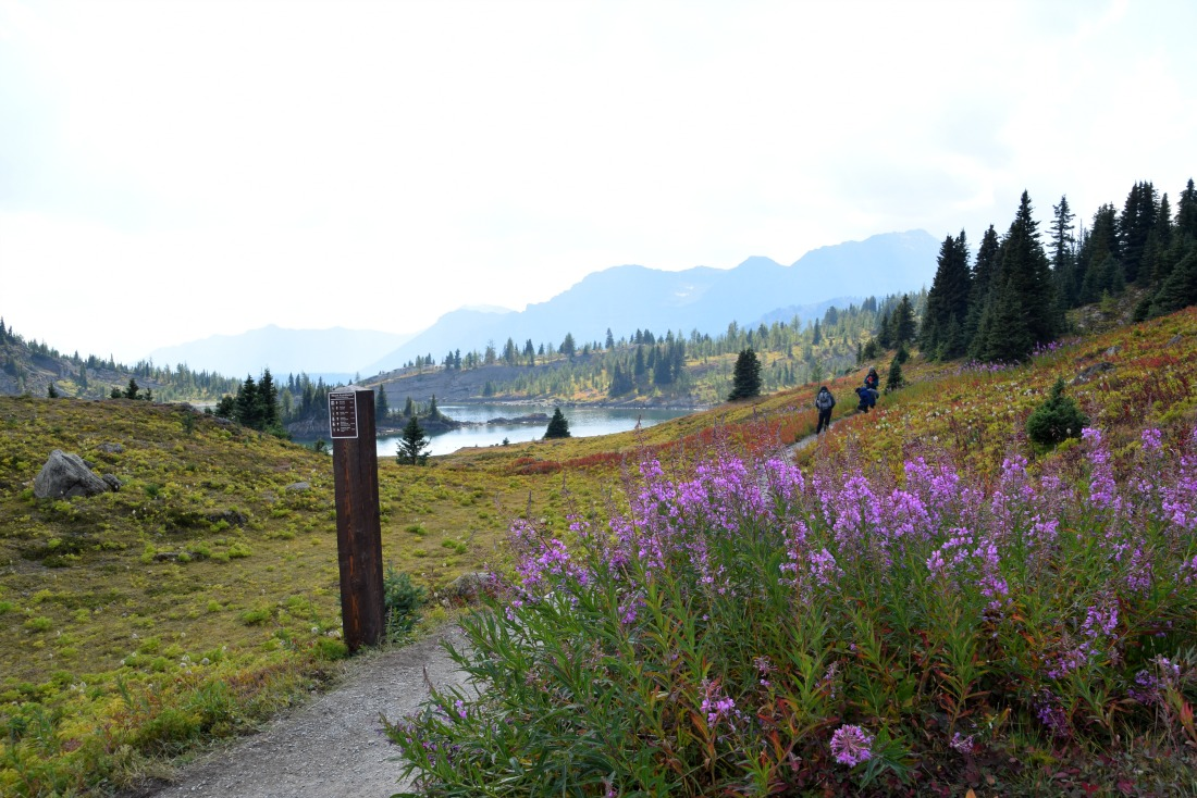 Sunshine meadows trail