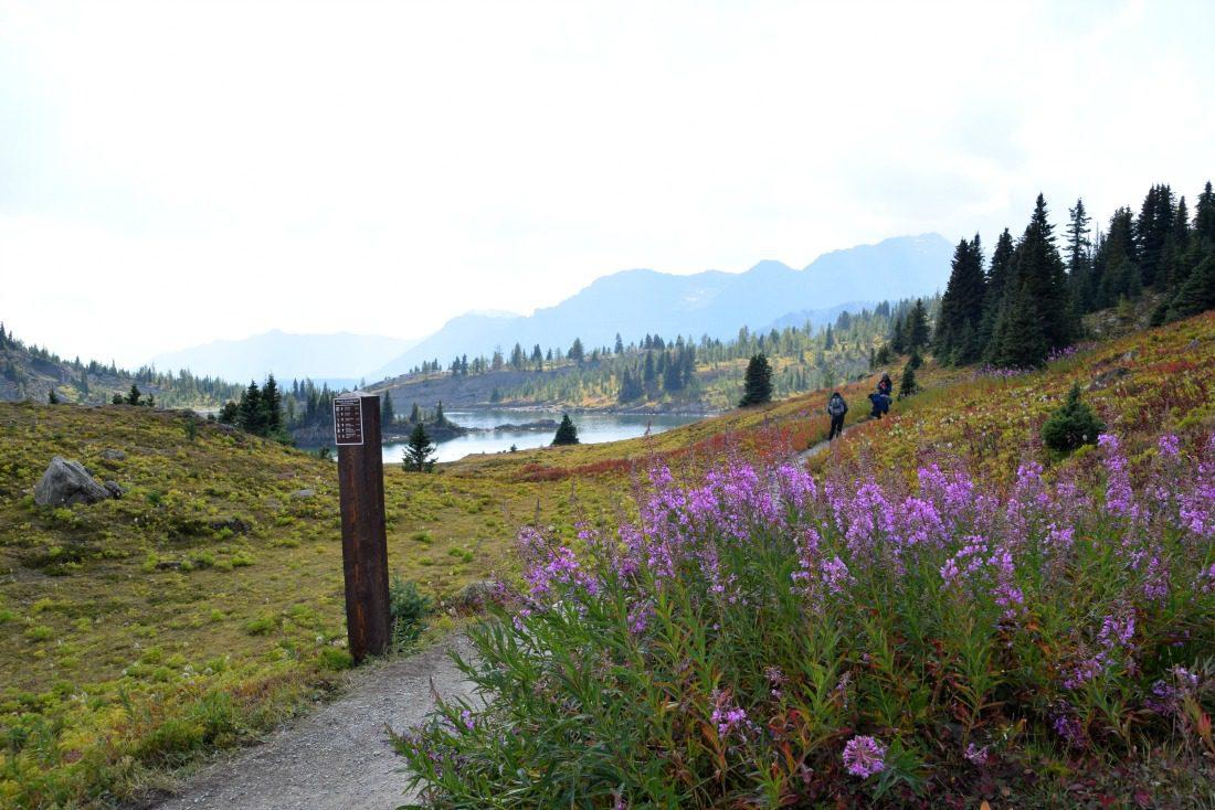 Sunshine meadows trail