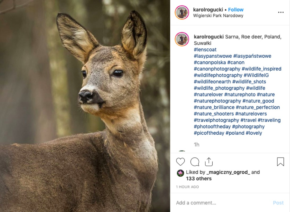 wildlife_hashtags