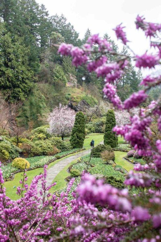 the butchart gardens vertical