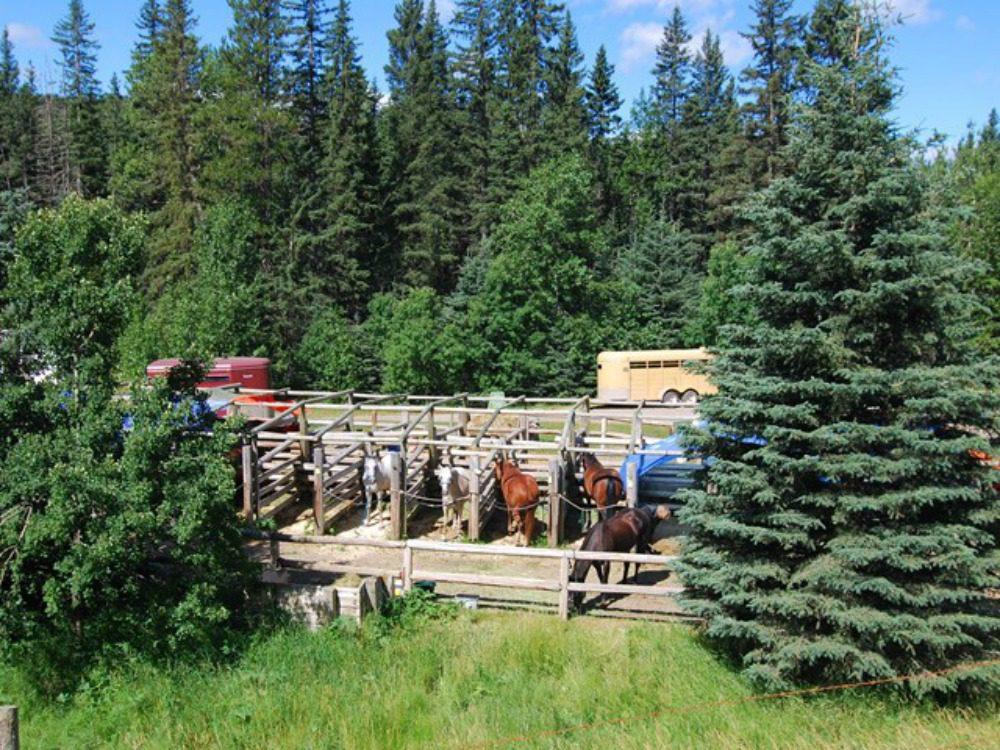 equestrian camping