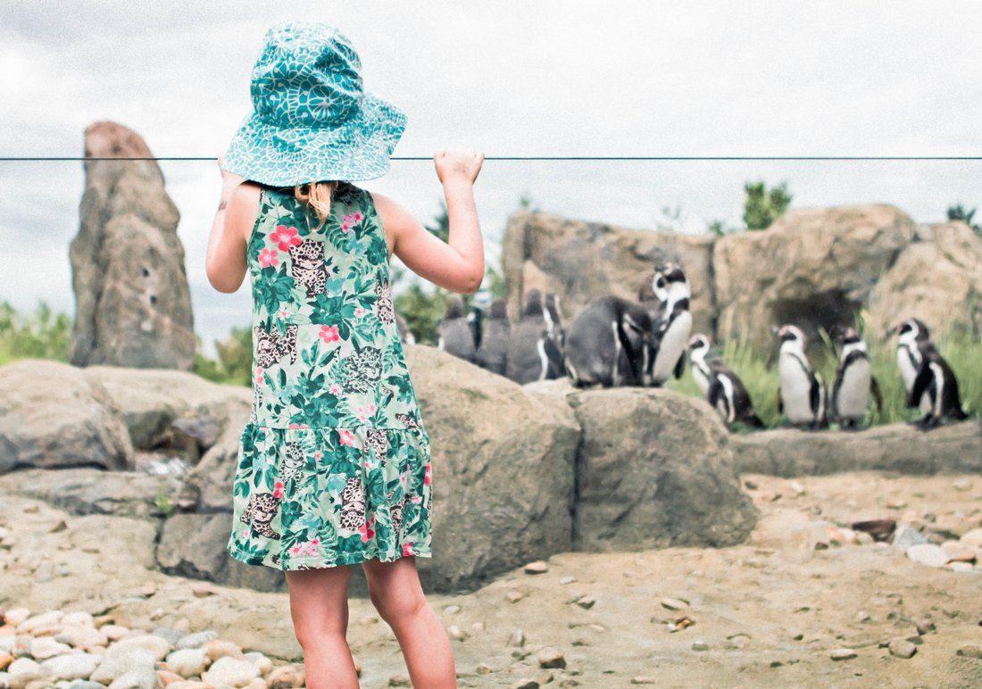 Penguin Plunge Calgary Zoo