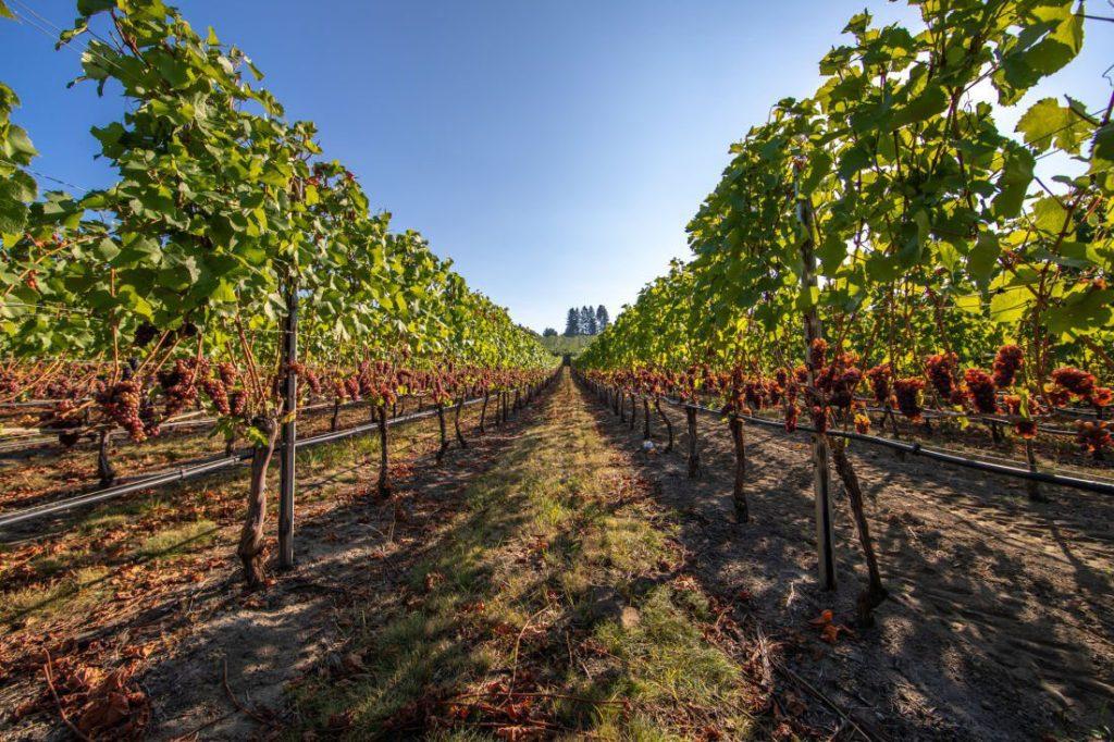 wine tours in penticton
