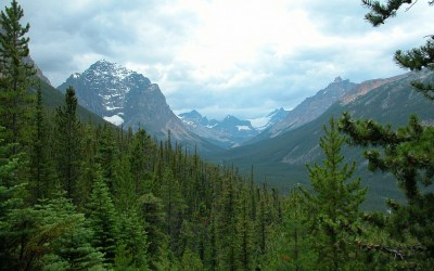 Cavell Meadows, Canada, 2008