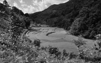 Myanmar, rijstvelden in de buurt an Kyaukme