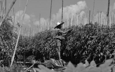 Myanmar, drijvende tuinen bij het Inle Meer