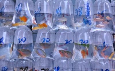 Hong Kong, Kowloon, visjesmarkt