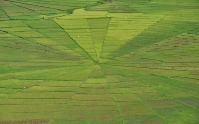 Spinnenweb rijstvelden bij Cancur, Flores, Indonesië, 2012