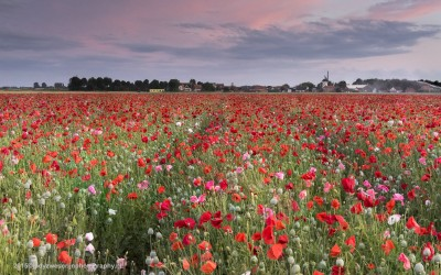 Klaproos, Brabant, 5-7-2015